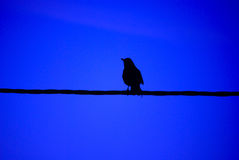 Bird on a wire blue Royalty Free Stock Photography