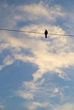 Bird on a wire on blue sky background Royalty Free Stock Photos
