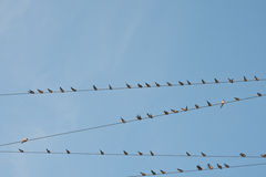 Bird on a wire cable Royalty Free Stock Photos