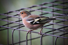 Bird on wire cage Stock Images