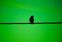 Bird on a wire green Royalty Free Stock Photos