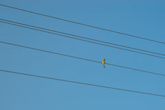 Bird on the wire Royalty Free Stock Photography