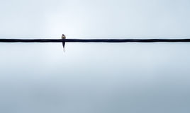Bird on wire royalty free stock image