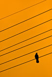 A bird on wire. Silhouette of a bird sitting on an electrical wire in sunset evening with orange sky Royalty Free Stock Photography