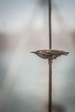 Bird on a wire Stock Images