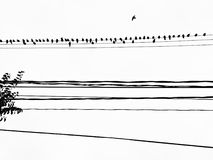 Bird on the Wire in Toronto, Canada. Stock Photo