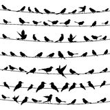 Bird on a wire4. Set of birds on wires. A vector illustration Royalty Free Stock Photo