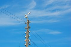 Bird on wired. Gull sitting on the pillar with wires Stock Image