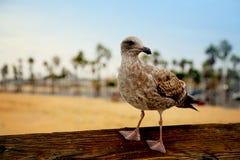Bird on wood railing Royalty Free Stock Photo