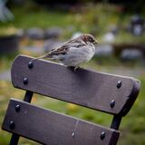 Bird on wooden chair Stock Photography