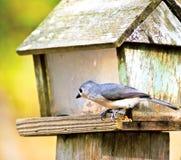 Bird on a Wooden Feeder stock photo