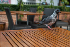 Bird on wooden table Stock Photography
