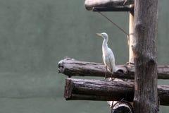 Bird. On woods on sun light Stock Photography