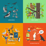 Bird 2x2 Images Concept Stock Photo