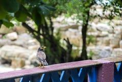 Bird& x27 ; regards de s Photographie stock libre de droits