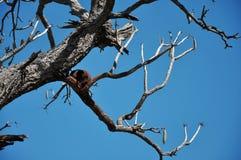 Bird& x27; s gniazdeczko na gałąź Obraz Royalty Free
