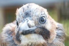 Bird& x27; s oko i głowa Zdjęcia Stock