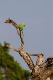 Bird in Yala Stock Photos
