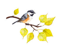 Bird with yellow leaves branch. Watercolor for autumn design. Bird at branch with yellow autumn leaves. Watercolor Royalty Free Stock Image