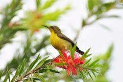 Bird. Yellow bird on the tree Royalty Free Stock Image