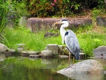 Bird in Zen Garden Stock Photos