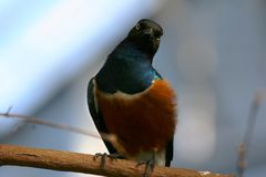 Bird In The Zoo. Bird sitting on a branch at the Calgary Zoo, Canada Stock Photography