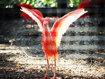 Bird. Zoo, red , animal, wing royalty free stock photography