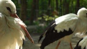 Bird in the zoo in summer stock footage