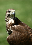 Bird03 Royalty Free Stock Image