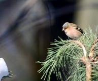 bird1 Zdjęcia Stock