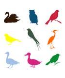 Bird2 Image stock