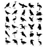 Bird2 Royalty Free Stock Image