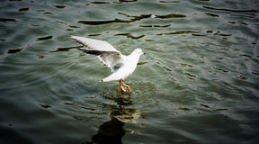 bird2 taniec Obrazy Stock