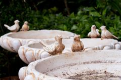 Birdbath. In a Royalty Free Stock Images