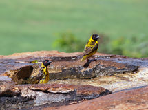 Birdbath Stock Photography