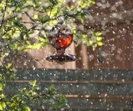 Birdbath Lizenzfreie Stockfotos