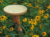 Birdbath and black eyed susans, Rudbeckia Hirta. Birdbath and black eyed susans Stock Image