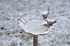 Birdbath frozen over and covered in a layer of snow. Water in a birdbath frozen during the wintertime with a thin layer of snow Royalty Free Stock Images