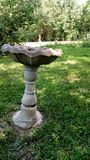 Birdbath in garden. A picture of an old birdbath leaning in a garden Royalty Free Stock Photography