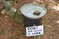 Birdbath with humorous sign. Indicating that dogs are welcome to stop for a drink of water Stock Images