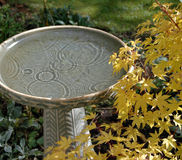 Birdbath and Maple. Raindrops falling in birdbath during a break in the clouds Royalty Free Stock Photography