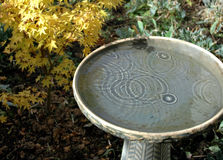 Birdbath in rain Stock Image