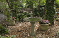 Birdbath with water. With plants and flowers Stock Images