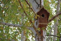 Birdbox auf Birke Lizenzfreie Stockfotos