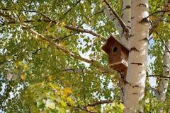 Birdbox auf Birke Lizenzfreies Stockbild