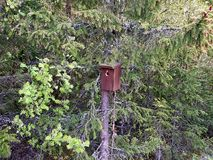 A birdbox in the forest royalty free stock images