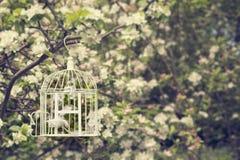 Birdcage στο άνθος στοκ εικόνα