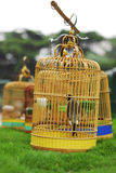Birdcage. Several brown birdcage on grass Royalty Free Stock Photo