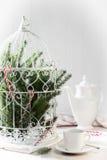 Сосна разветвляет Birdcage Стоковая Фотография RF