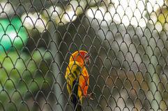 birdcage Lizenzfreie Stockfotos